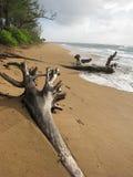 Árboles que abrazan la orilla Foto de archivo libre de regalías