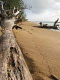 Árboles que abrazan la orilla Imagen de archivo