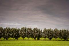 Árboles que agitan foto de archivo libre de regalías