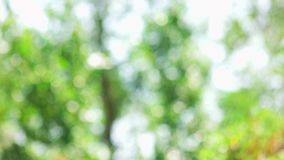 Árboles que agitan Blurred almacen de video