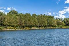 Árboles que alinean un río debajo del cielo azul Imagenes de archivo