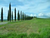 Árboles que alinean una calzada en Toscana Italia foto de archivo libre de regalías