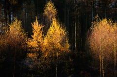 Árboles que brillan intensamente Imagen de archivo libre de regalías