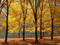Árboles que cambian colores en un parque Imagen de archivo