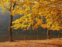 Árboles que cambian colores en un parque fotos de archivo