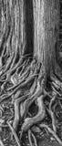 Árboles que caminan Imagenes de archivo