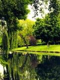 Árboles que crecen al lado del río imagen de archivo libre de regalías