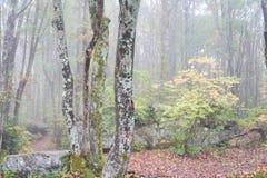 Árboles que crecen en el bosque de Pennsylvania foto de archivo libre de regalías