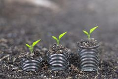 Árboles que crecen en monedas Planta que crece en pila de la moneda del dinero Concepto del dinero del ahorro imagenes de archivo