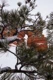 Árboles que disfrazan la belleza natural Imagen de archivo