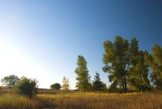 Árboles que hacen frente a la luz brillante de la mañana imagenes de archivo