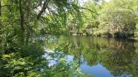 Árboles que pasan por alto a Santa Fe River Foto de archivo libre de regalías