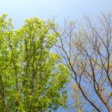 Árboles que ponen en contraste fotografía de archivo libre de regalías