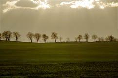 Árboles que ponen en contraste las nubes con el sol translúcido fotos de archivo libres de regalías