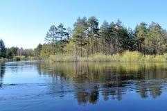 Árboles que reflejan en el agua de la primavera. Imagen de archivo