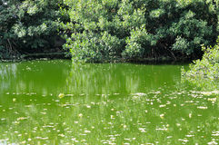 Árboles que reflejan en el agua en el pantano, en un día de verano caliente Fotos de archivo libres de regalías
