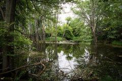 Árboles que reflejan en el agua tranquila Foto de archivo libre de regalías