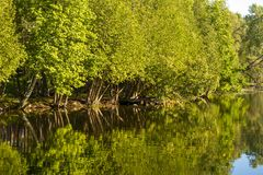 Árboles que reflejan en el río de Scugog en Lindsay Ontario Canada Foto de archivo libre de regalías