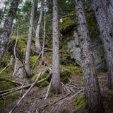 Árboles que se colocan de las rocas Fotos de archivo