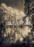 Árboles que se colocan en el río Fotografía de archivo libre de regalías