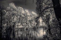 Árboles que se colocan en el río Fotos de archivo libres de regalías