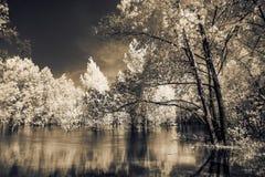 Árboles que se colocan en el río Imagen de archivo libre de regalías
