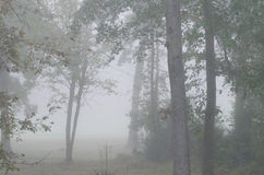 Árboles que se colocan en niebla Fotos de archivo