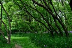 Árboles que se inclinan Fotos de archivo