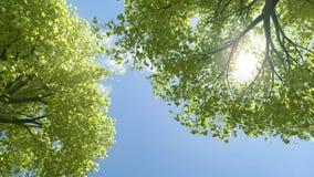 Árboles que soplan el verano stock de ilustración