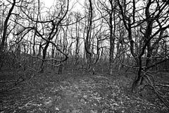 Árboles quemados en bosque Imagen de archivo libre de regalías