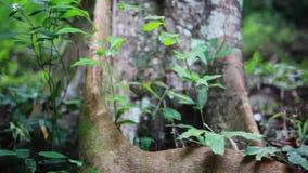 Árboles, raíces y plantas en el bosque soleado de la selva 1920x1080 metrajes