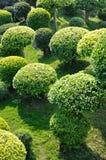 Árboles redondos del cown Imagen de archivo libre de regalías