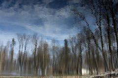Árboles reflejados en agua Fotos de archivo libres de regalías