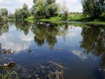 Árboles reflejados en el agua Foto de archivo