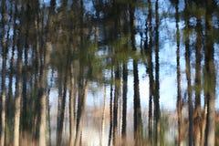 Árboles reflejados en la charca Fotografía de archivo libre de regalías