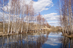 Árboles reflejados en un lago Imagen de archivo