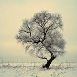 Árboles rimados Fotografía de archivo libre de regalías