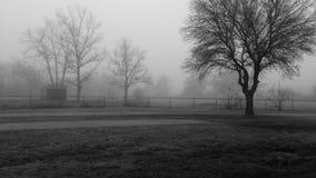 Árboles rodeados por la niebla Foto de archivo