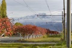 Árboles rojos brillantes al día del otoño imagenes de archivo