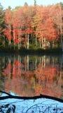 Árboles rojos del otoño reflejados Foto de archivo libre de regalías