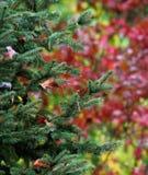 Árboles rojos y verdes Imagenes de archivo