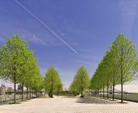 Árboles, Roosevelt Island Park, New York City Imágenes de archivo libres de regalías