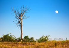 Árboles salvajes Fotografía de archivo libre de regalías