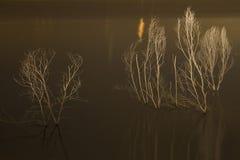Árboles secados Fotos de archivo