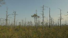 Árboles secados en el d3ia del otoño del bosque Tiro liso del carro almacen de video
