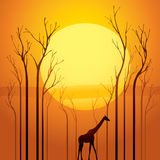 Árboles secados en puesta del sol