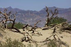 Árboles secos Fotografía de archivo libre de regalías