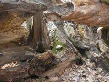 Árboles secos Imagen de archivo libre de regalías