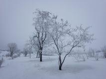 Árboles secos en invierno fotografía de archivo