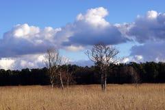 Árboles secos en un campo de lámina. Fotos de archivo